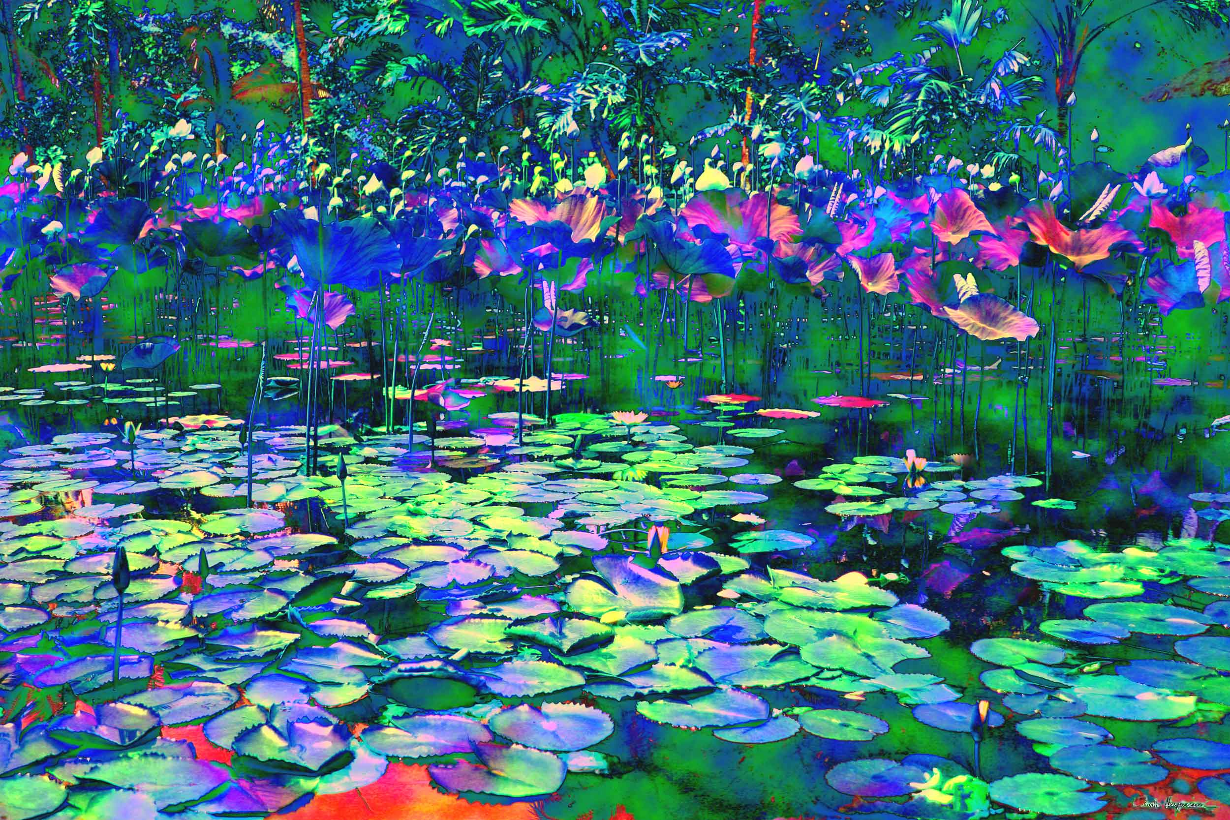 Cornelia Hagmann Contemporary Artist Painting Water Lilies Pond Colours